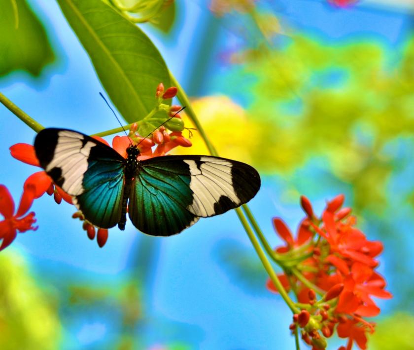butterfly 050714