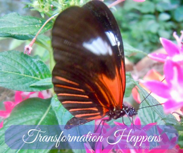transformation-happens